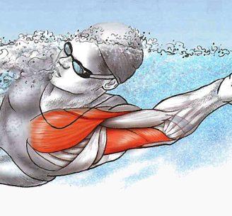 Natación y musculación: entrenamiento, y todo lo que necesita aprender